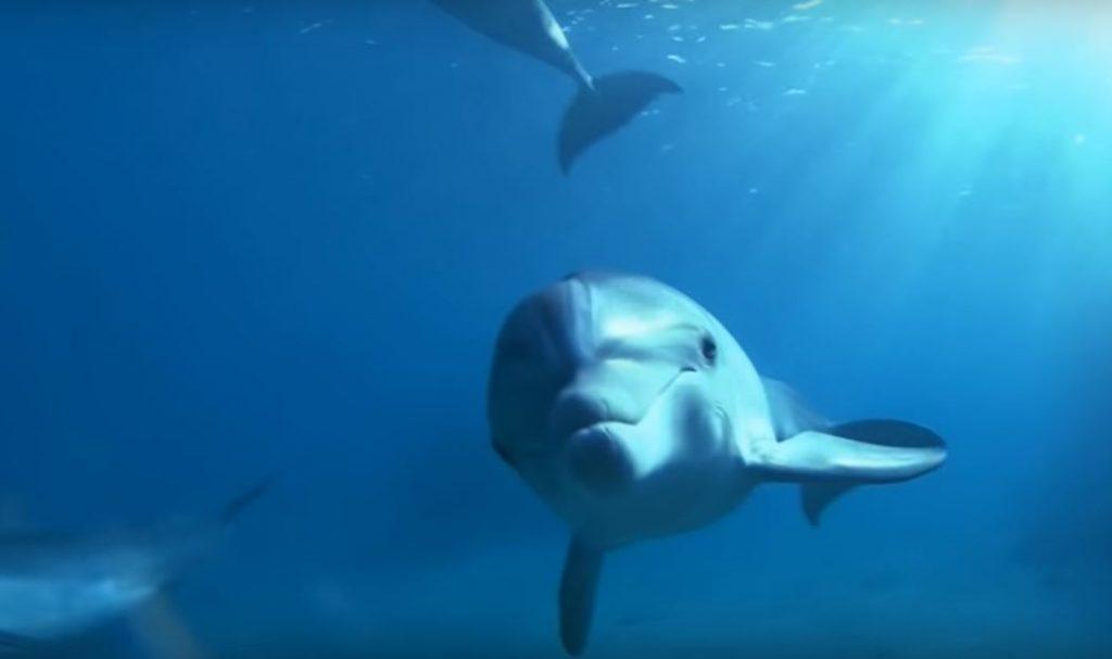 Delfin schaut zur Kamera